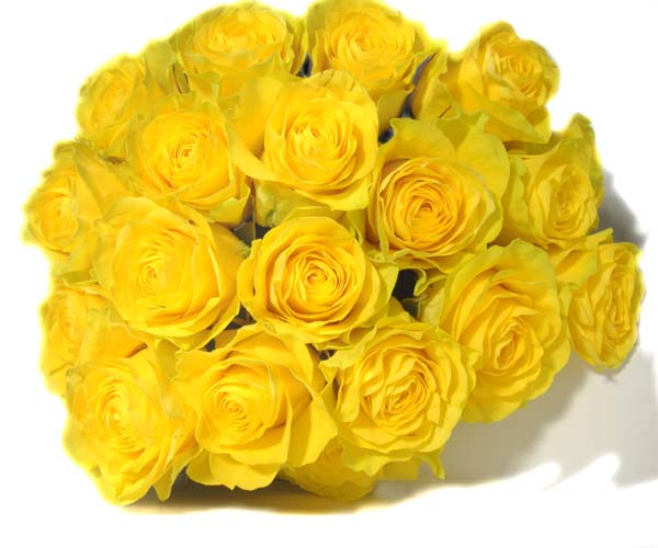 Happy Birthday Yellow Roses Happy Birthday Yellow Roses